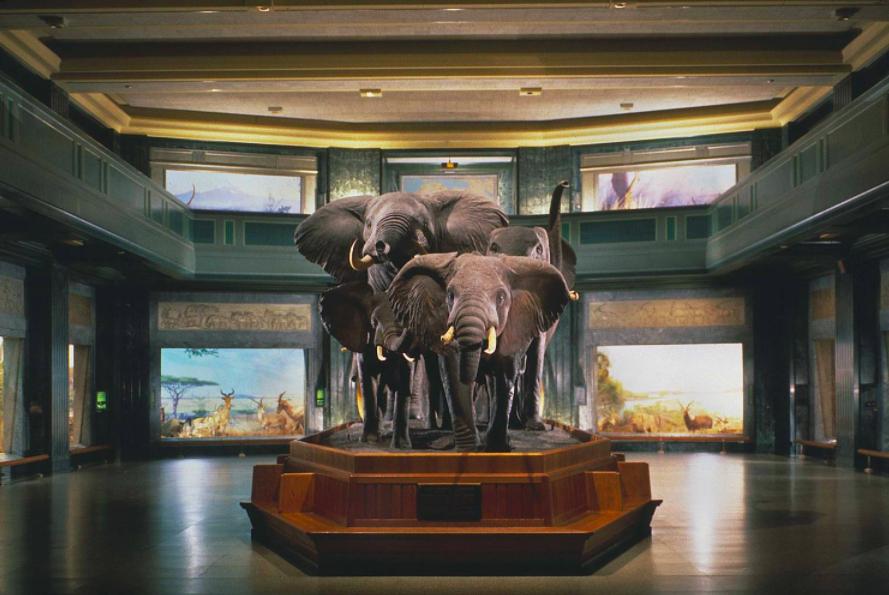 Музей_естествознания_нью-йорк_7