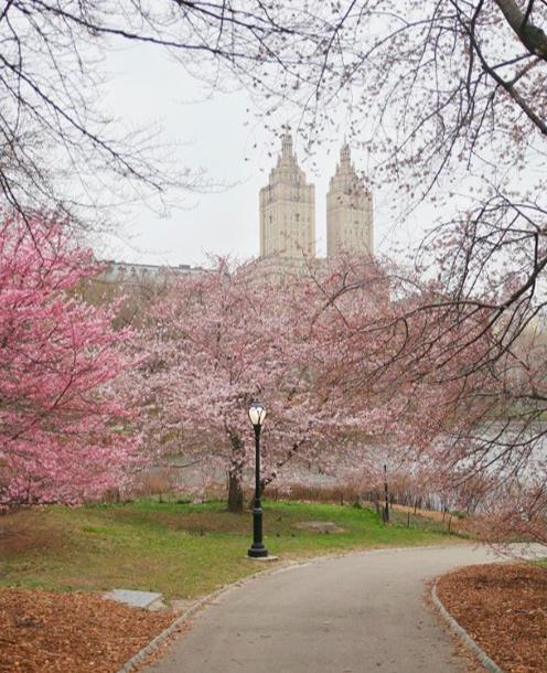 экскурсия по Центральному Парку Нью-Йорка free 10