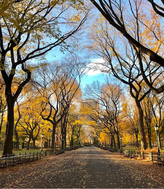 экскурсия по Центральному Парку Нью-Йорка free 6
