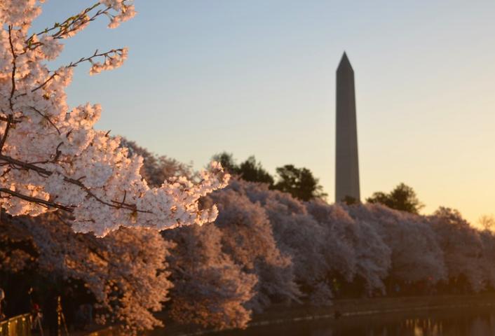 Монумент Вашингтона free 4