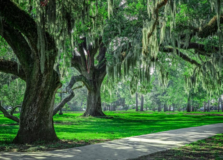 Городской Парк Нового Орлеана 1